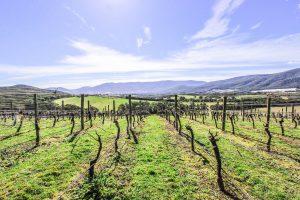 Vineyard 2 300x200 - Vineyard Irrigation Victoria