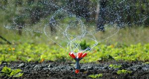 julians services03 1 300x159 - Sprinklers